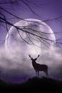 dio luna