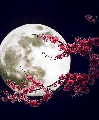 luna fiore
